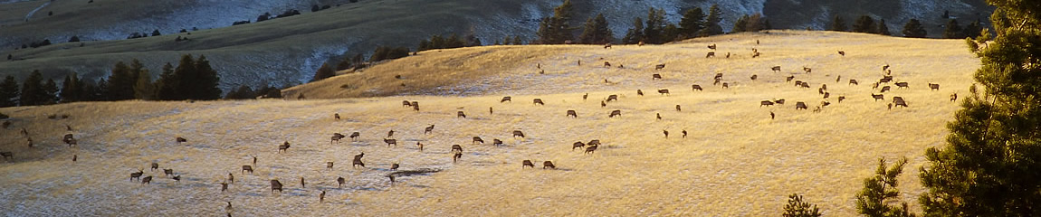 Herd of deer on a high plateau